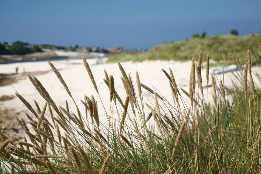 Glimpse of the Bar beach through the dunes