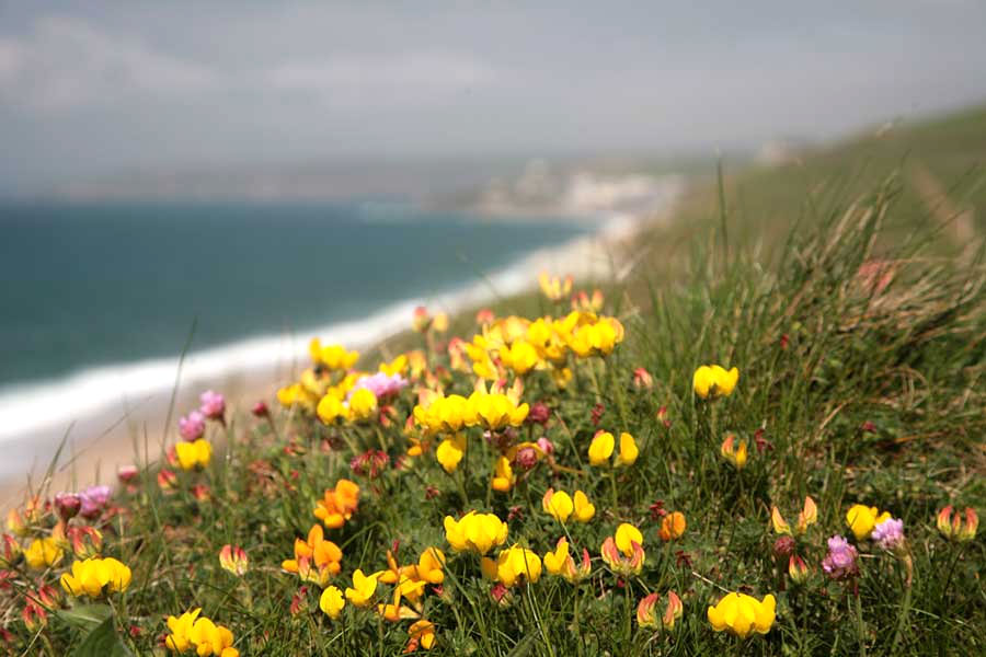 Loe Bar Flowers